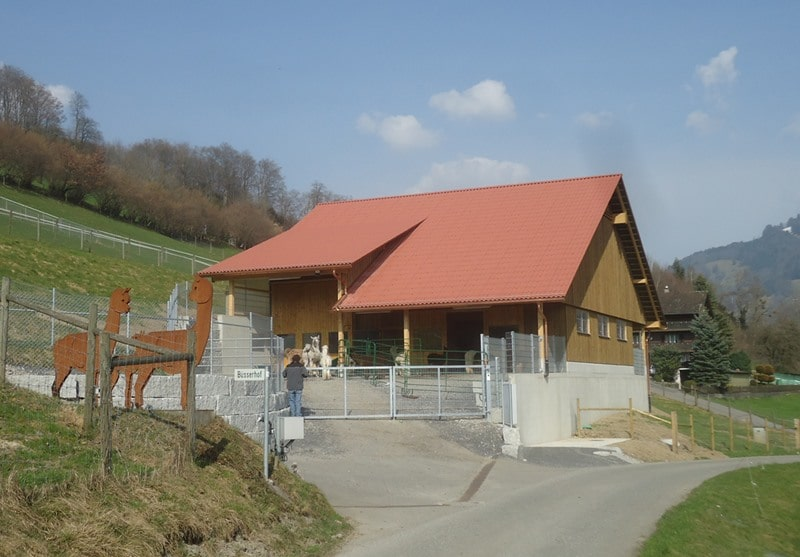 neubau-alpakastall-remise-benken-planung-bauleitung-holzbau