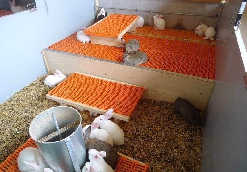 neubau-kaninchenmaststall-flawil-planung-holzbau